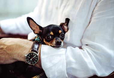 Bespaartip #83 | Dierendag voordeel op heel veel dierartikelen
